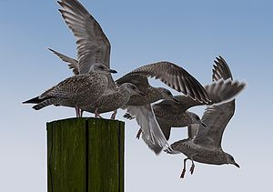 English: A bird flight Deutsch: Beginn eines V...