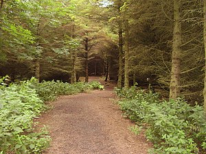 Woodland. A popular woodland walk for dog owne...