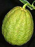 Ichangfruit.jpg