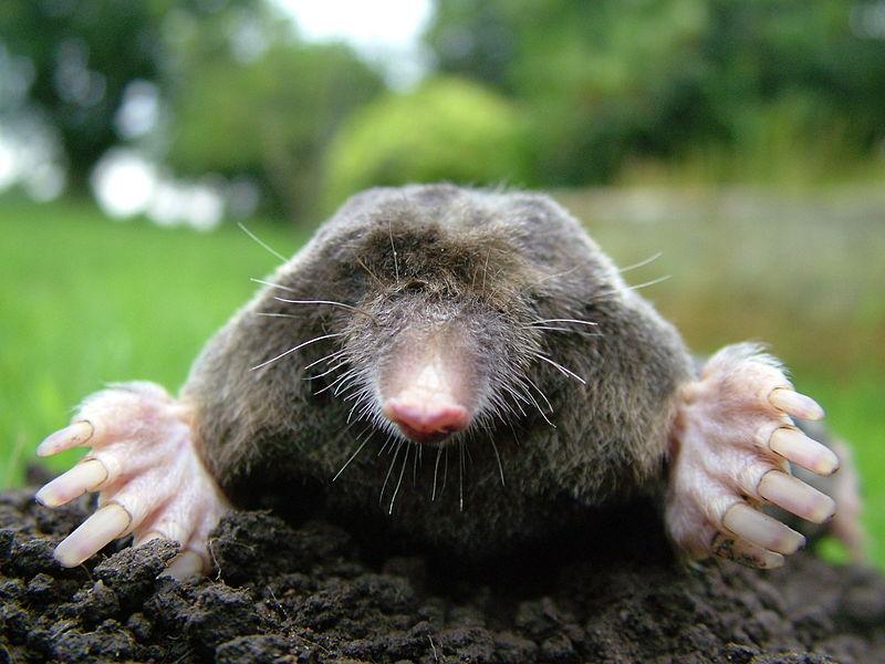 Close-up of mole by Michael David Hill, 2005