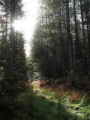 English: Narrow path leading east