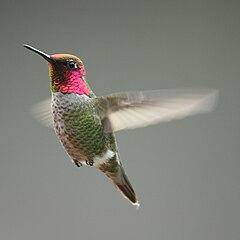 attract hummingbirds
