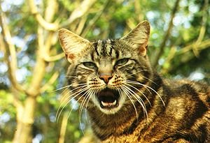 Cat, with its mouth open