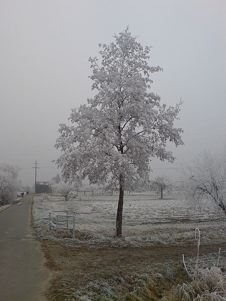 File:Solitary Winter Tree Erzhausen.jpg