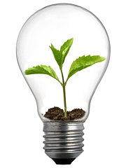 A sprout in a lightbulb