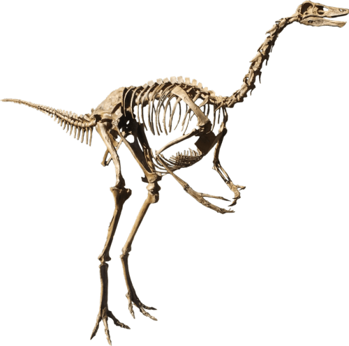 Struthiomimus isolated.png