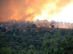 2010 Carmel forest - fire near Isfiya first da...