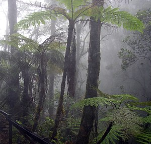 Tropical forests and high-altitude regions oft...