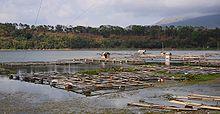 Keramba jala apung untuk memelihara ikan nila di Ranu Pakis, Klakah, Lumajang