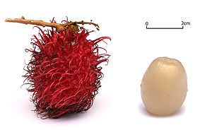 Rambutans on a white background.