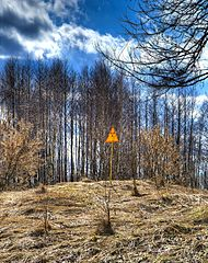 A vörös erdő Csernobil mellett