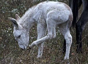 Donkey foal (between one day an one month old)