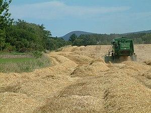 English: Working the fields. John Deere combin...
