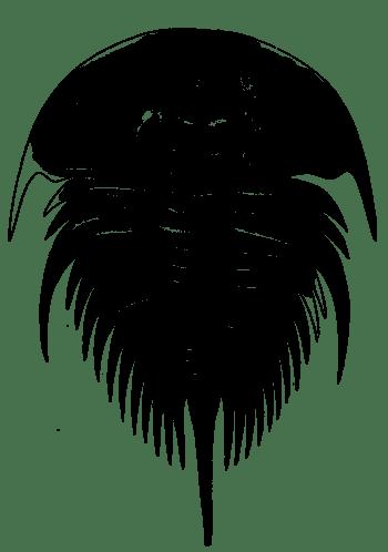 Illustration of Olenellus thompsoni.png