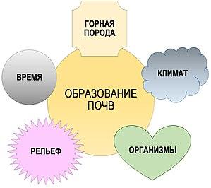 Почвообразование — Википедия