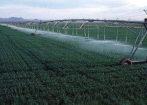 English: Center pivot irrigation on wheat grow...
