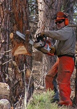 https://i1.wp.com/upload.wikimedia.org/wikipedia/commons/thumb/8/87/Chainsaw_cutting_tree.jpg/250px-Chainsaw_cutting_tree.jpg?w=740&ssl=1