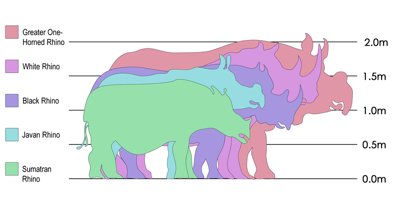 Comparison of the five extant species of rhinoceros - Wikimedia Commons