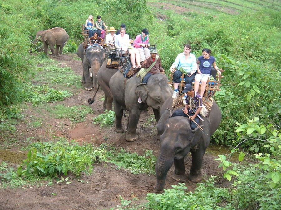 Elephant ride in Chiang Rai Province 2007-05 7