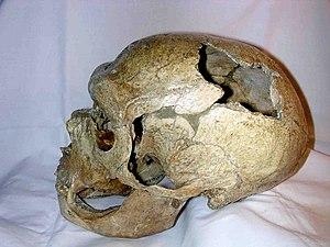 Neandertal skull from La Chapelle aux Saints. ...