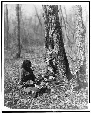 English: A 1908 Roland Reed photo of an Ojibwe...
