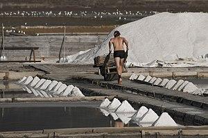 English: Worker at the salt fields in Strunjan...