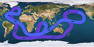 Path of the thermohaline circulation. Purple p...