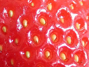 Close-up of a strawberry, showing the pips.
