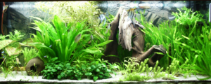 240 litres aquarium with different fishes, pla...