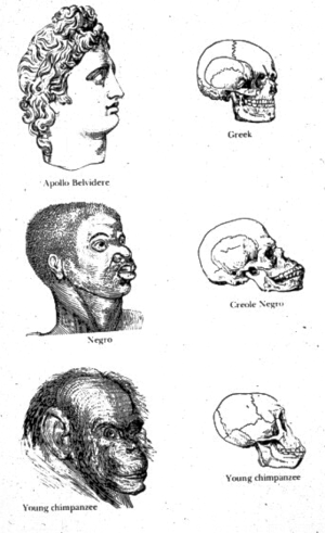 Drawings from Josiah C. Nott and George Gliddo...