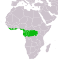 Distribution map of the Water Chevrotain (Hyem...
