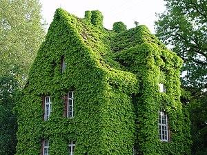 Begrüntes Haus in Gießen