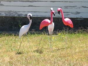 Lawn-flamingo