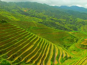 English: A Longji terrace in Longsheng county,...