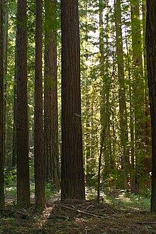 Navarro River Redwoods State Park Wikipedia