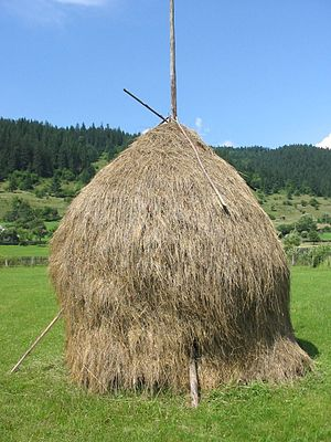 Traditional hay from Romania