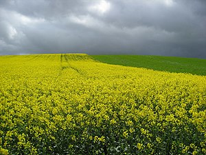 English: Crops change and storm clouds approach