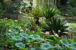 Flickr - brewbooks - Japanese Garden, Lotusland (3).jpg