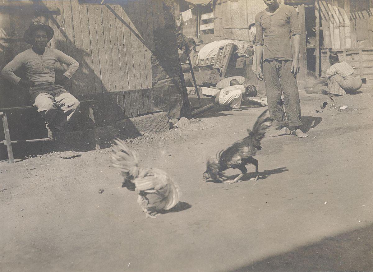 Philippine cockfight 1900-02.JPG