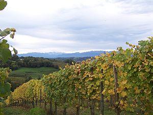 Vignoble du jurançon (Monein, Pyrénées-Atlanti...
