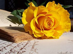 Rosa gialla e libro antico