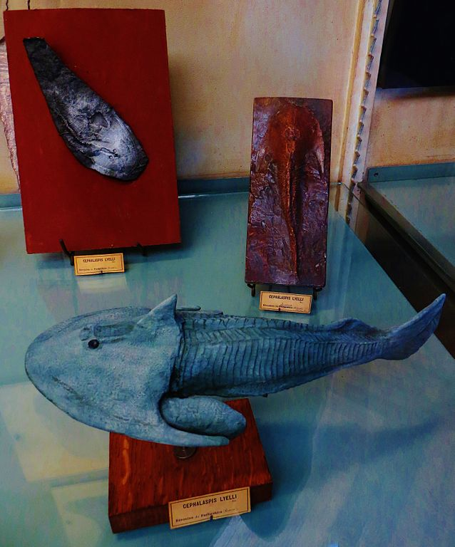 Vida marina paleozoica: Cephalaspis lyelli
