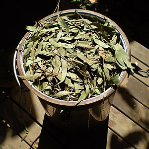 English: Leaves of Eucalyptus olida packed int...