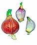 English: There is to see a little red onion fr...