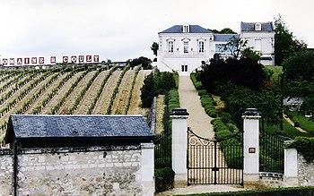 Vineyard near the French wine region of Chinon...