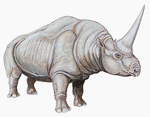 English: Elasmotherium caucasicum Русский: Ela...