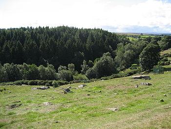 English: Hutts Wood. Small valley of Hutts Gil...