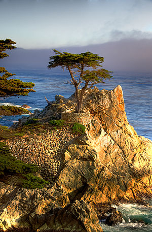 The Lone Cypress at Monterey Bay (17 miles Drive).