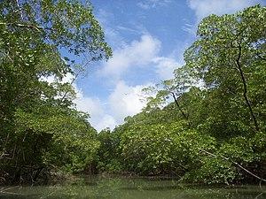 Igarapé da bacia Amazônica, no Brasil.