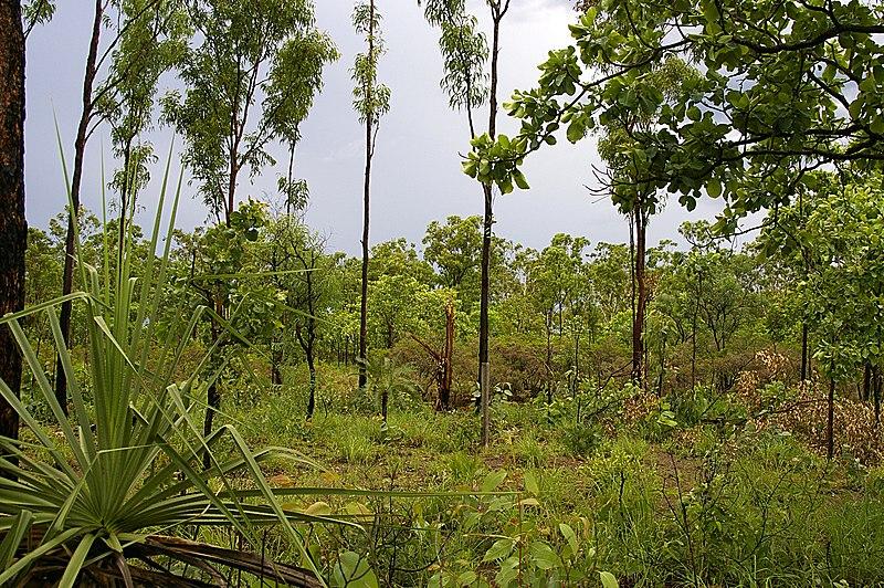File:Tropical savannah (Top End).jpg